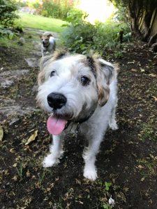 tom's automotive service west seattle cute dog tonka daisy