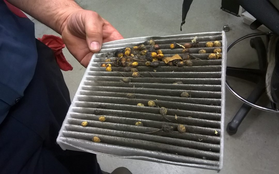 How Will I Know It's Time to Change My Cabin Filter?