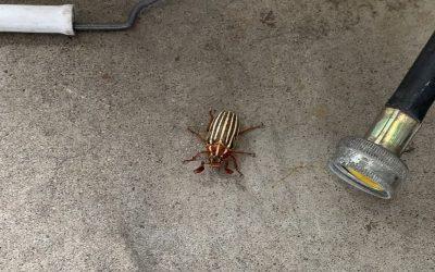 June Bug (video)